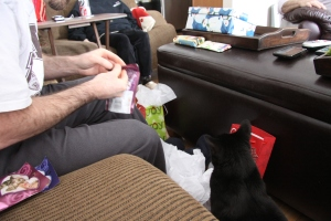 Baby Panther sniffs out her gift from Grammy