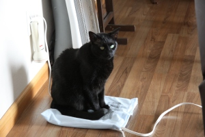 Baby Panther warming her buns on the heating pad. Grandma would be proud.