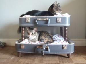 cat suitcases