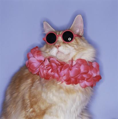 kitty_makeover